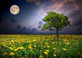 stock photo of moon-flower  - Night and the moon on a yellow flowers field - JPG