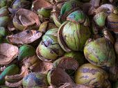 image of hairy  - Textured background of stack of hairy brown coconuts in natural tropical light - JPG