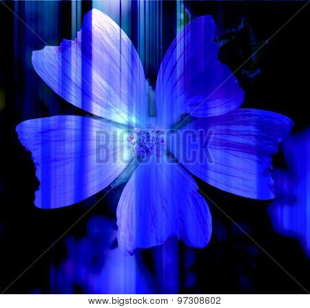 Abstract Blue Flower With Blue Lines In The Background
