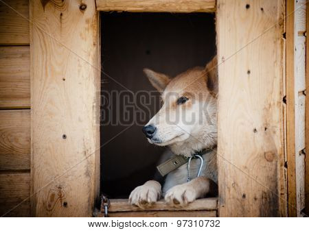Sad Dog In Doghouse