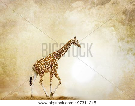 Giraffe On Abstract Background