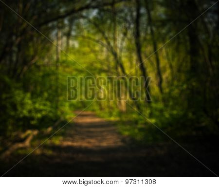 Blurry Background With Forest