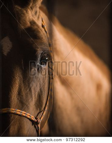 Horse Eye In The Dark