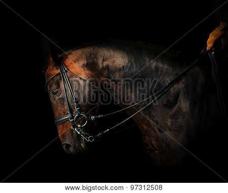 Rider On A Horse In Dark