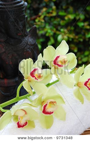 Buddha Statue  And Orchids