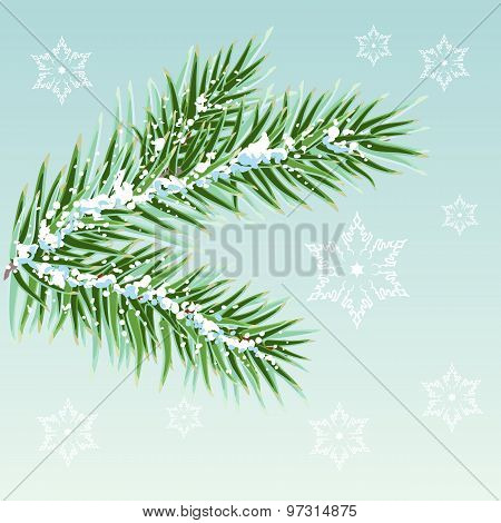 Green Pine branches in the snow