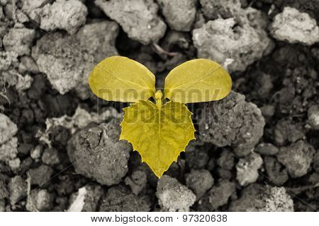 Yellow Sprout