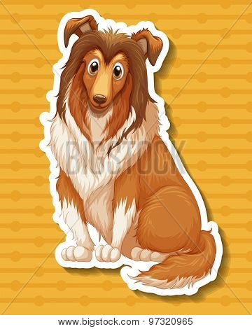 Afghan hound sitting on yellow background