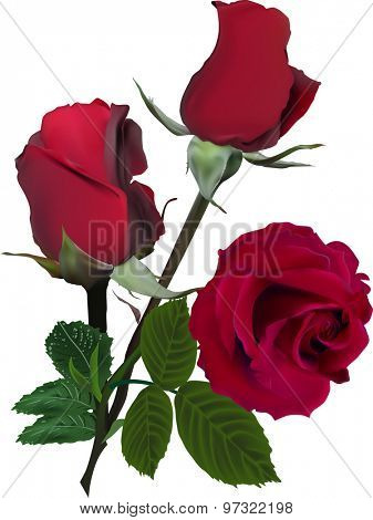 illustration with three red roses isolated on white background