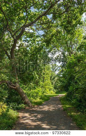 Summer Trail
