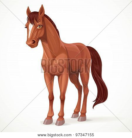 Beautiful Brown Horse With A Star On His Forehead