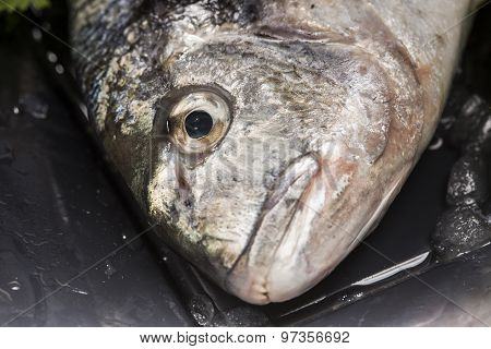 details of sea bream on a black plate