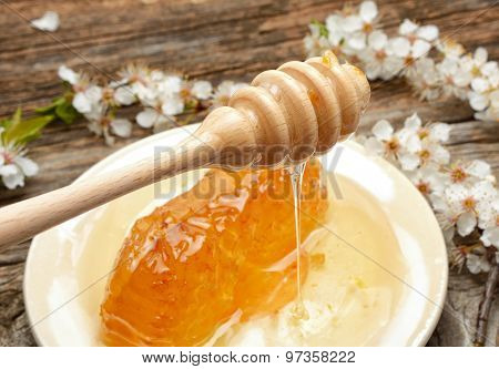 Honey, honeycomb and apricot flowers