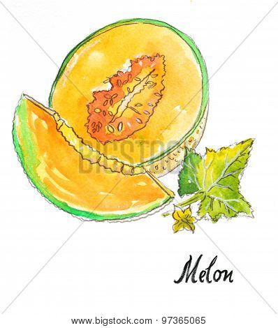 Watercolor Melon