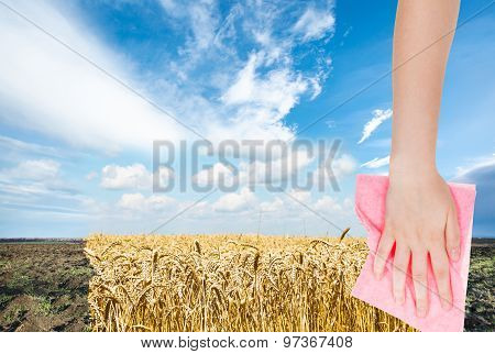 Hand Deletes Plowed Field By Pink Cloth