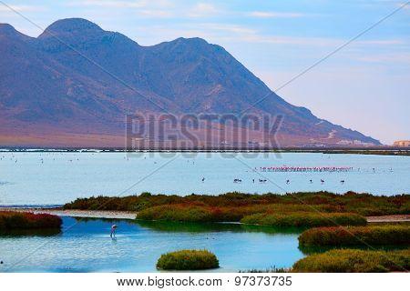 Las Salinas in Cabo de Gata Almeria flamingos lake in Spain