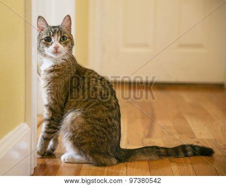 a cute small cat or kitten looking at the camera sitting in a hallway with natural light
