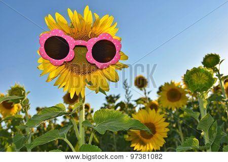 sunflower wearing pink sunglasses