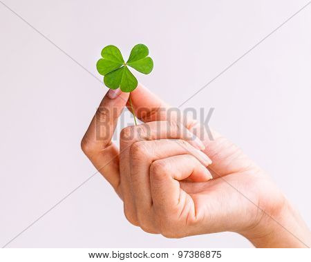 The Girl Hold  Clover Leaf . - Concept For Love , Hope And Goodness..