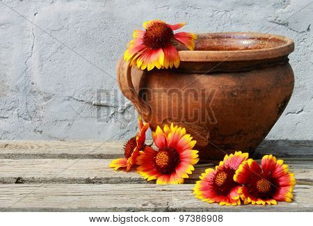 Old Clay Pot With Colorful Flowers