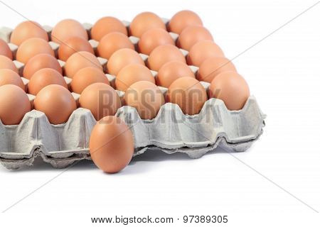 Fresh Hen eggs in paper tray on white background.