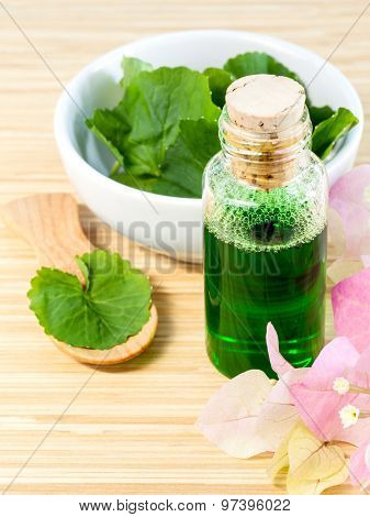 Natural Spa Ingredients . - Centella Asiatica  Urban, Asiatic Pennywort  For Skin Care.