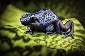 stock photo of poison arrow frog  - blue poison frog Dendrobates Azureus - JPG