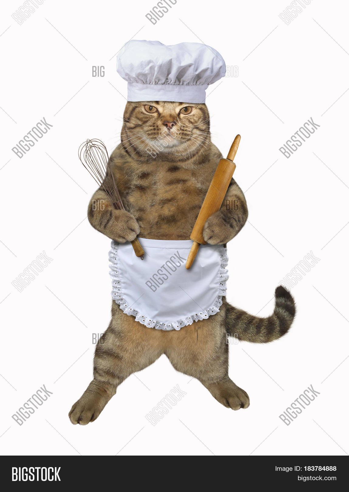 Cat With Chef Hat And Apron