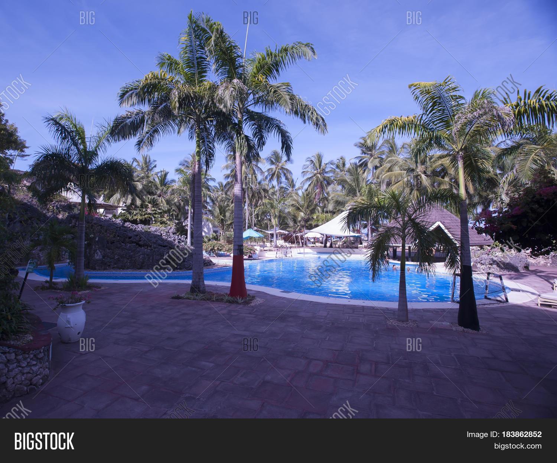 Palm Trees Around Swimming Pool Image Photo Bigstock
