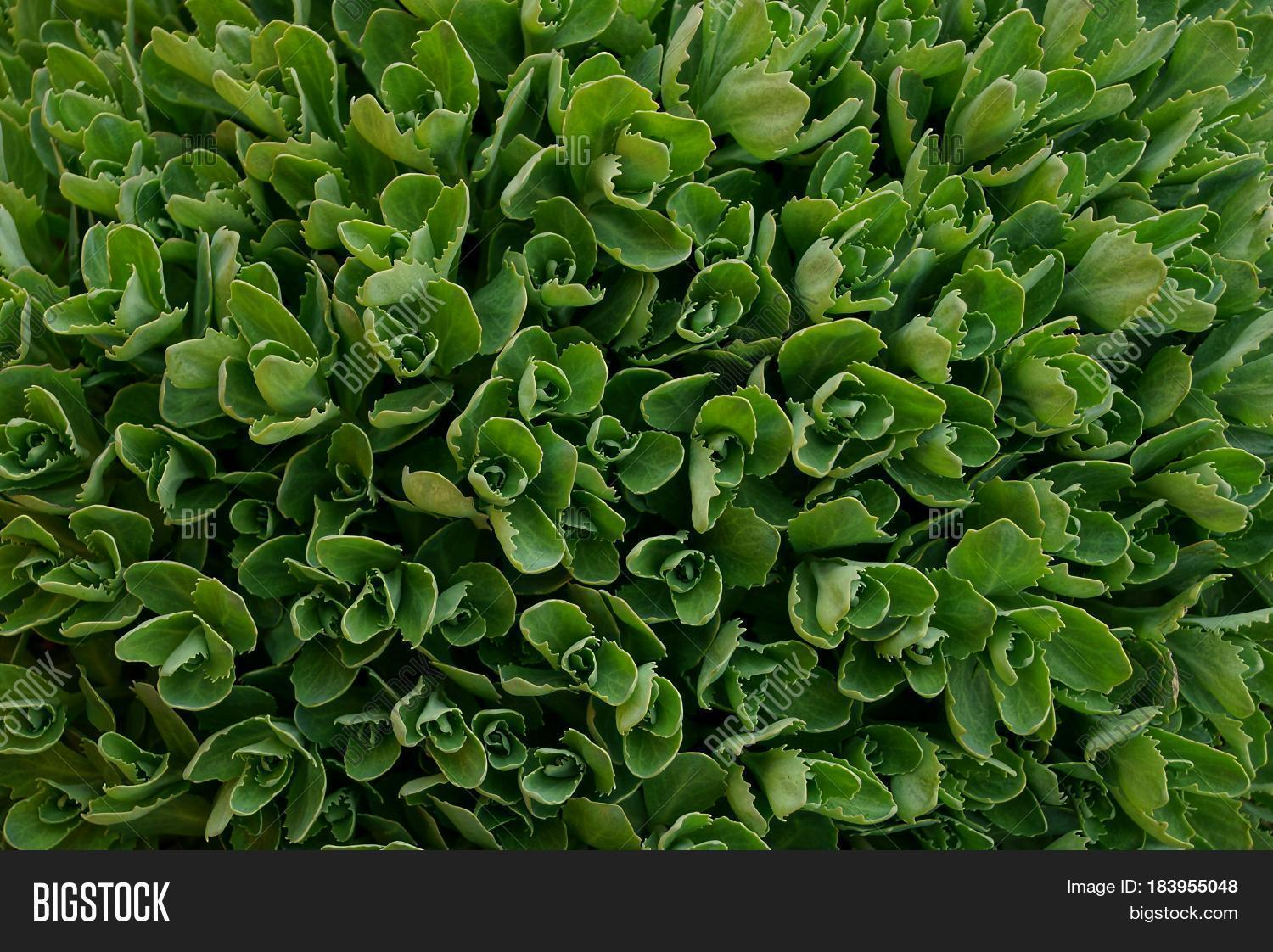Green texture small plants garden image photo bigstock for Small green outdoor plants