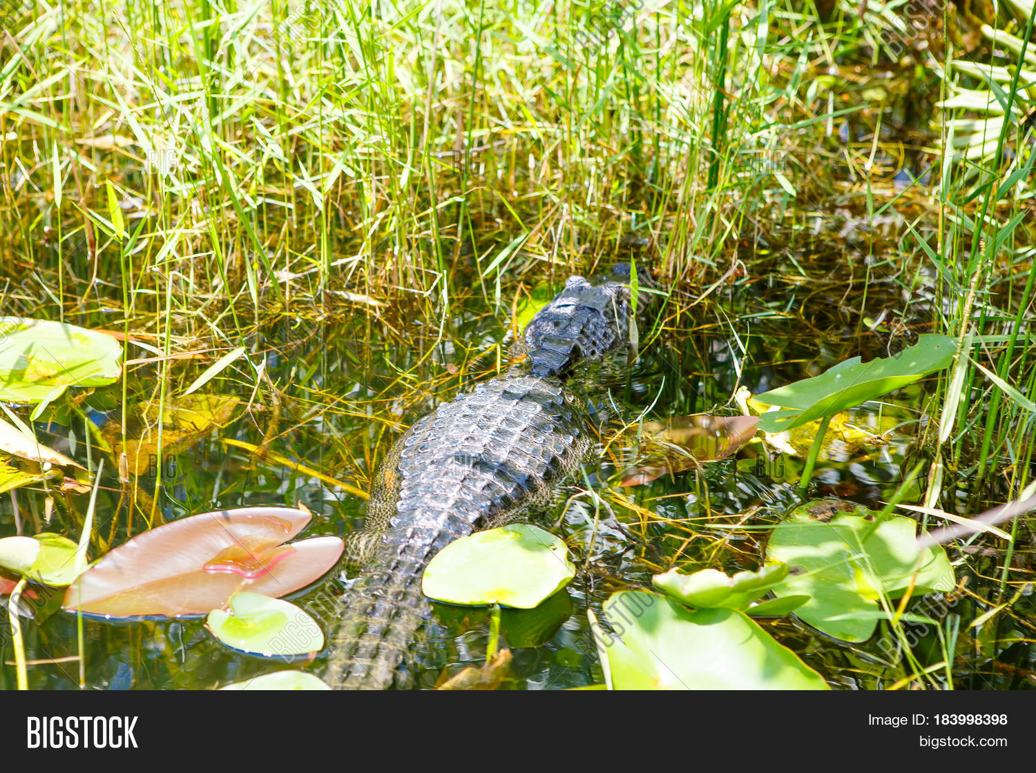the wetland ecosystem of the american everglades Wetland tourism: usa – the everglades national park the greater everglades ecosystem designated on the north american continent it.