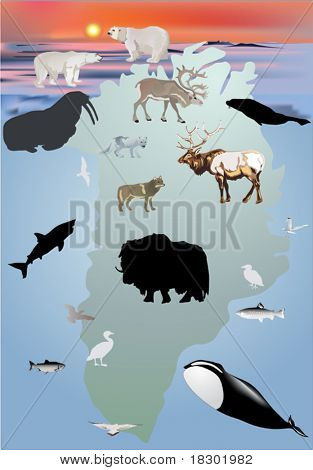 illustration with Greenland animals collection