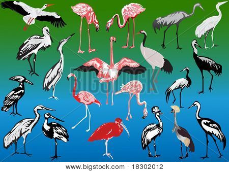 illustration with long legs birds collection
