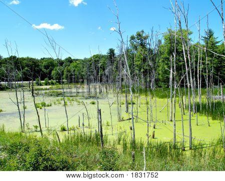 Swamp Land