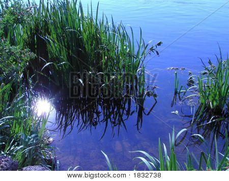 Sun On The Pond