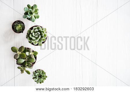 poster of Green house plants potted, succulentson clean white wooden background. Home gardening, close-up with copyspace. Scandinavian rustic style decor.