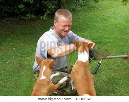 Helping Hounds