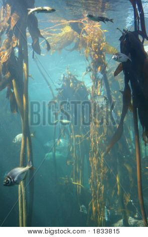 Underwater Seaweed Forest