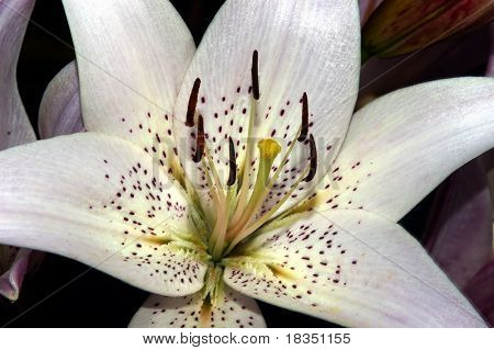 Close up shot of a flower with petals and stamen