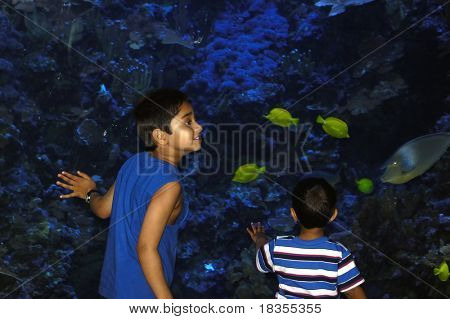 Two young Indian kids amused by fishes in an aquarium