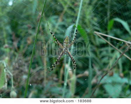 Spider 004