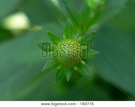 Plant 002