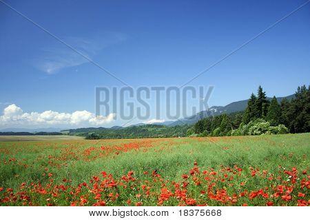 Feld unter Bergen westlichen Tatry Rohace in der Slowakei in Europa