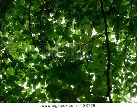 Plants  Leaves 002