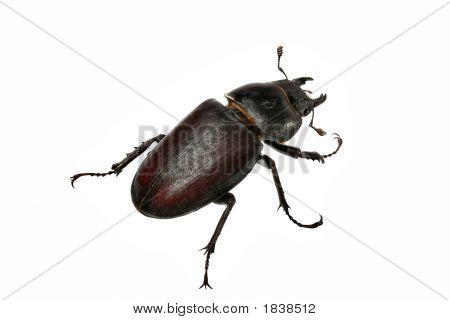 Beetle-2