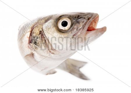 fresh fish isolated on white - bass