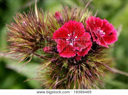 Flowerage.
