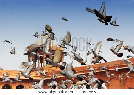 flying pigeons at the jama masjid mosque in delhi, india
