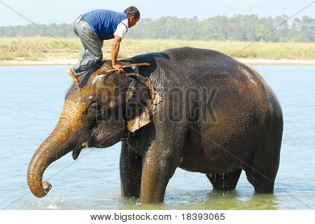 mounting an elephant (series: part 5 out of 5)