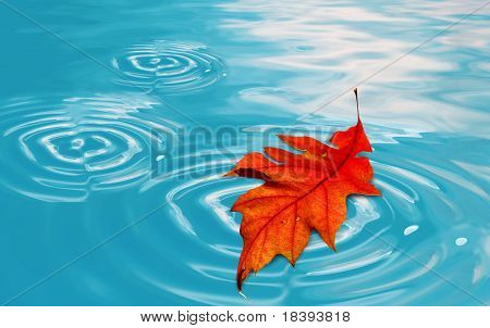 Orange autumn oak  leaf floating in clear blue water